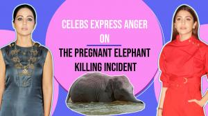 Celebs express anger on the pregnant elephant killing incident