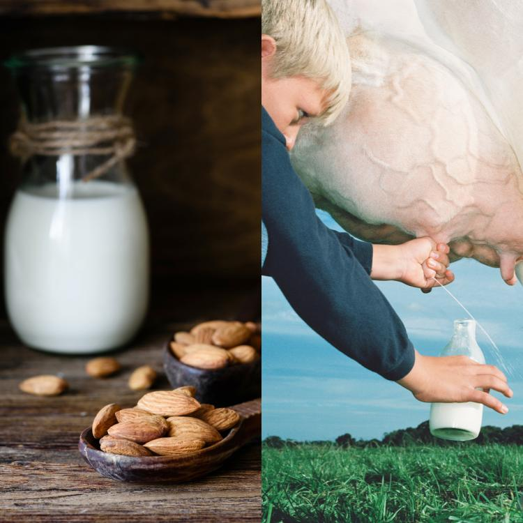 Almond Milk vs Cow Milk: Which is better and healthier?