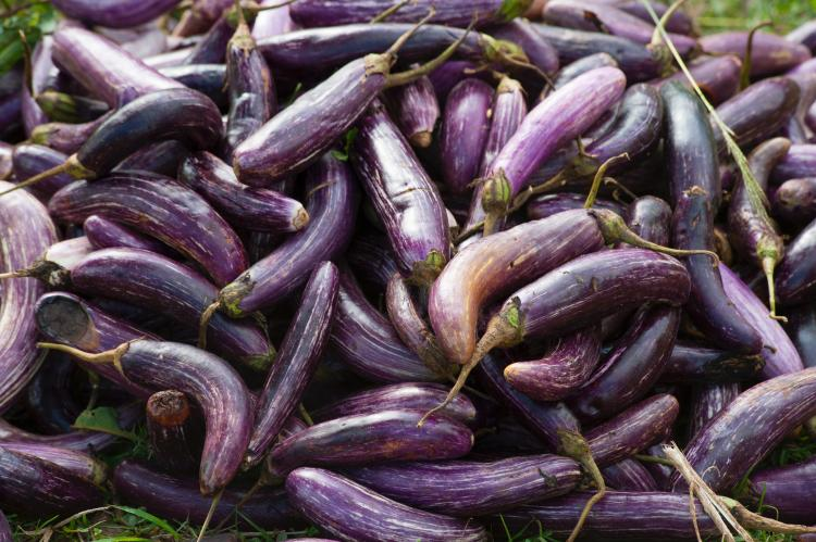 Food & Travel,pregnancy,brinjal,eggplant