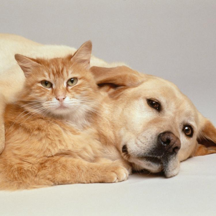 Cat Friendly Dog Breeds: 5 Popular dogs that can easily gel with your cat pets
