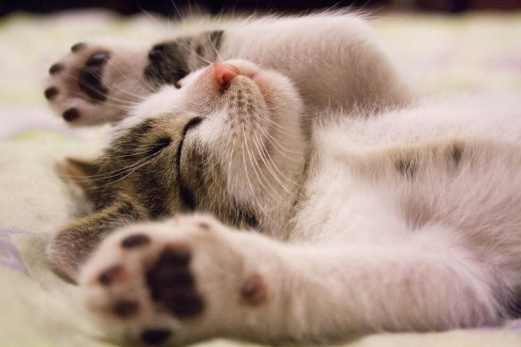 Home Decor Tips: Here's how you can make your home cat friendly