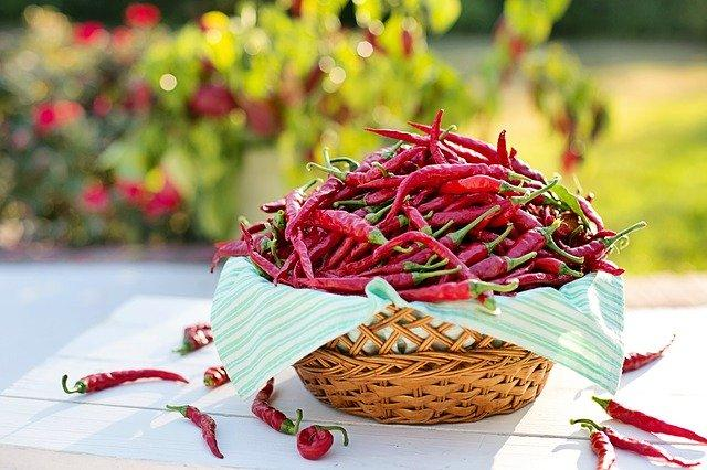 Red Chillies for Weight Loss: Here's how it works for the body