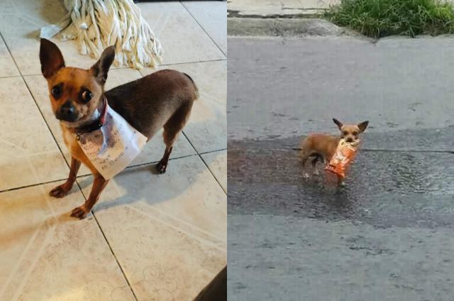 Coronavirus Effect: Man sends pet dog to buy cheetos and she completes the task for him