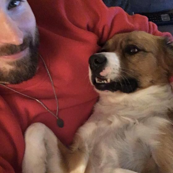 Chris Evans And Dodger: Chris Evans Faces A Goofy Accident While Grooming His Pet
