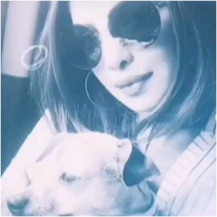 Priyanka Chopra has the most adorable way to wish Diana #NationalPetDay; Watch VIDEO