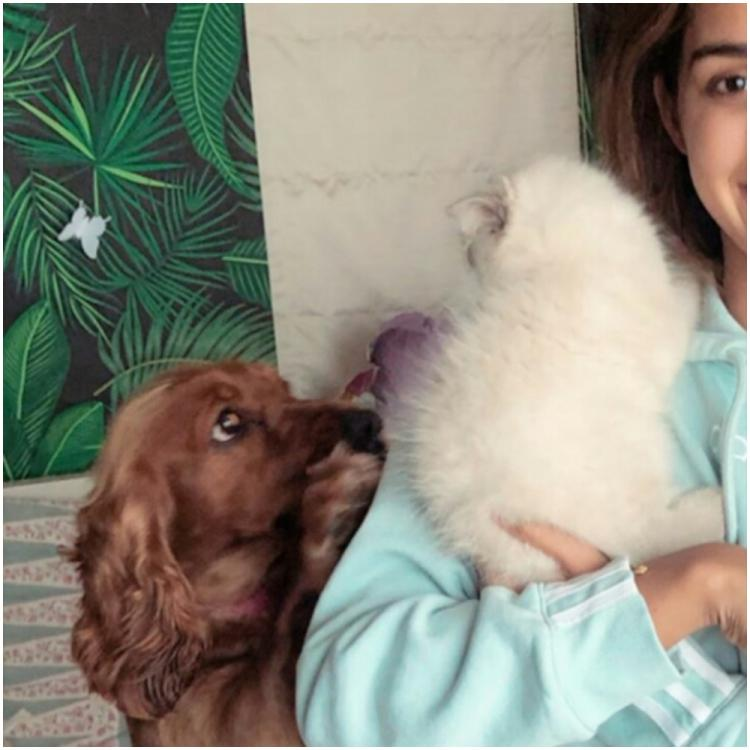 Bharat star Disha Patani shares an adorable photo of her pets fighting for her attention; Check it out
