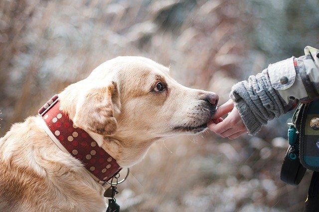 Pet Parenting: Things you must NEVER do while training your pup