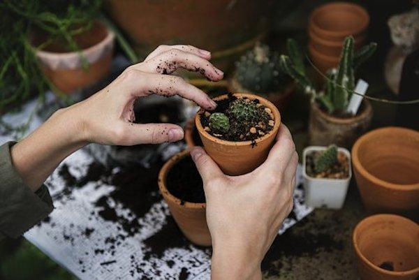 Cancer, Libra, Virgo: THESE Zodiac Signs love nature and find gardening therapeutic