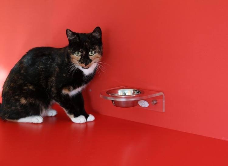Pet Parenting: Here are some tips to give your cat a proper meal