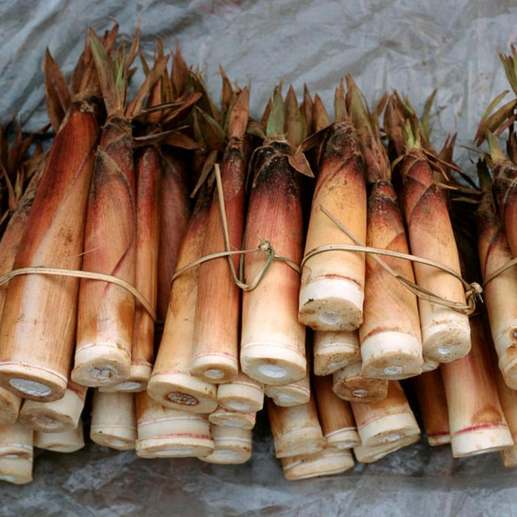 Bamboo Shoot Health Benefits: Here's why it should be added to your diet to reduce the risk of cancer