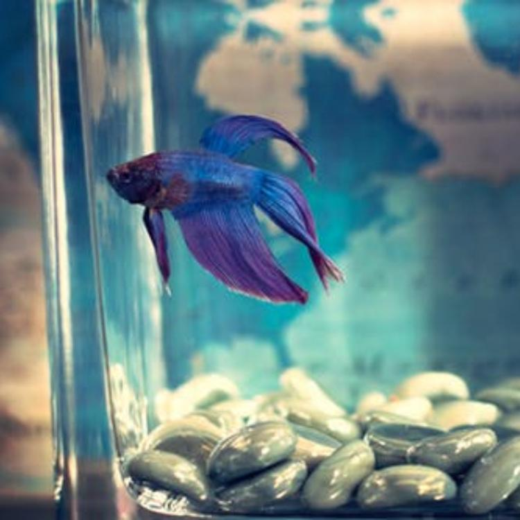 Aquarium: THESE are the tips for the beginners to take care of the fish tank