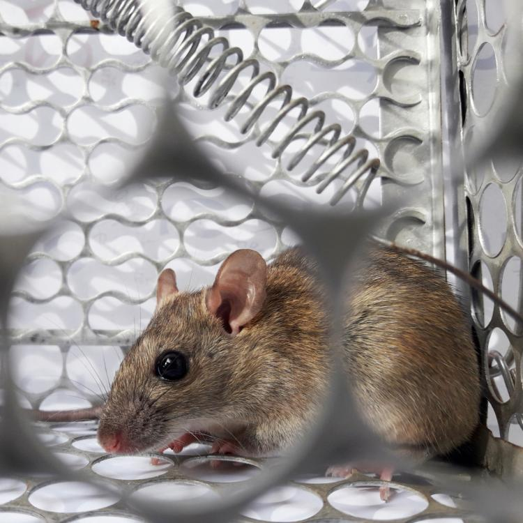 Hantavirus Prevention: How to prevent yourself from HPS infection?