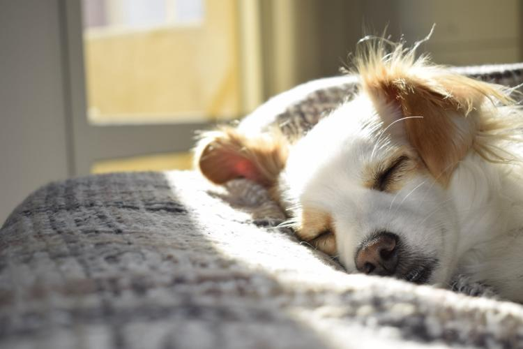 6 tips that can help you keep your home clean and fresh if you have a pet child