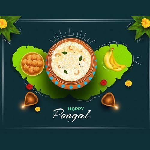 Pongal 2020 Wishes: Quotes, Messages, Facebook and WhatsApp Status to wish for the harvest festival