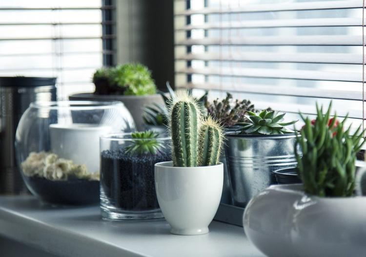 7 Foolproof tips and tricks to ensure your indoor plants thrive at home
