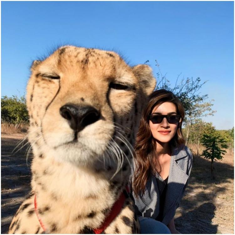 Kriti Sanon gets SLAMMED on social media for sharing photos with Cheetahs from Zambia; Here's what she says