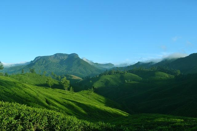 Travel Tales: Tea plantations across India that you must visit at least once
