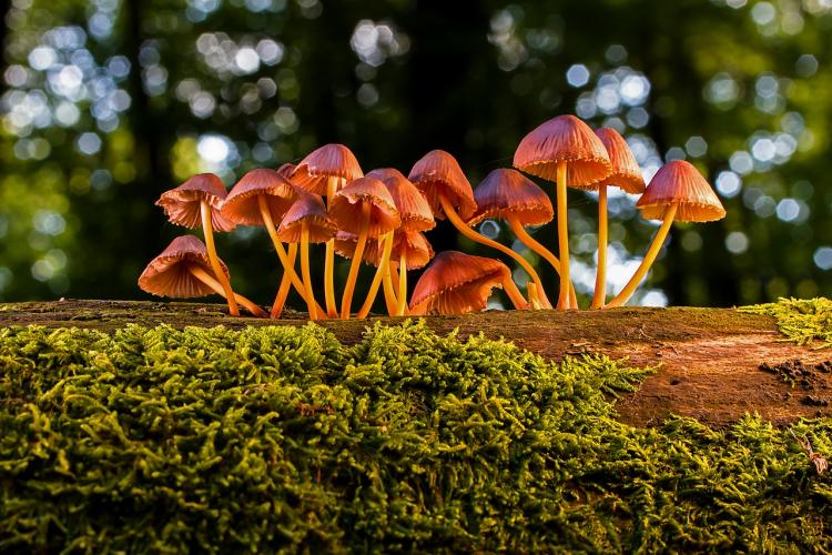 Love Mushrooms in everything? They come with beauty benefits as well; Check them out