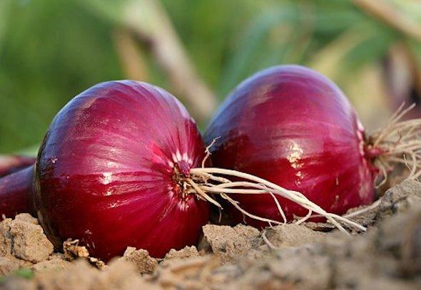 Diabetes: Here's how including onion in your diet can help you manage blood sugar levels