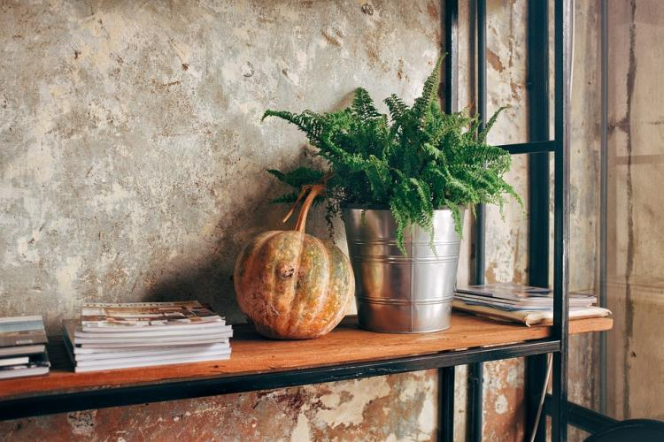 Check out THESE easy tips to look after your indoor plants during autumn