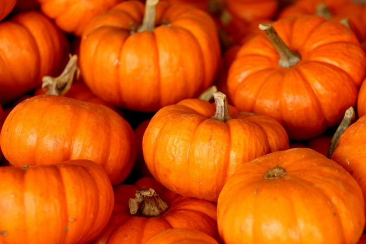 Pumpkin Health Benefits: From weight loss to better skin; here is the list of health benefits of this veggie