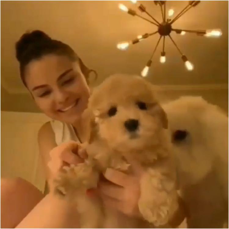 Selena Gomez misses her nights out with friends; Adopts a foster puppy while in isolation