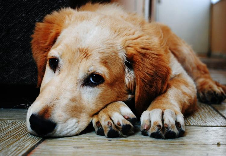 Pet Parenting: Here are 5 signs that indicate that your dog is depressed