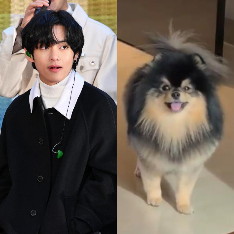 ARMY couldn't stop gushing about how big V's pet dog, Yeontan, has become.