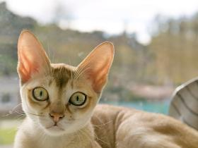 People,pets,Cats with Big Eyes