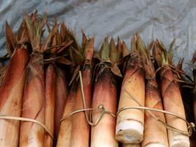 health benefits,Health & Fitness,Bamboo Shoots,Anti Cancer Agent