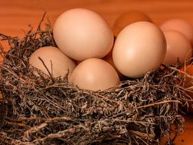 food,Health & Fitness,eggs benefits,proteins