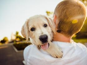 People,pet parenting,pet food,food for pets