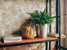Home Decor,indoor plants,autumn season,how to take care