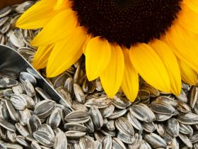 Beauty,glowing skin,diy home remedies,sunflower seeds
