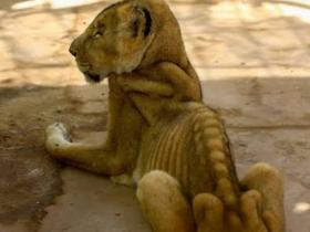 World,African Lions,Malnutrition,Animal Campaign